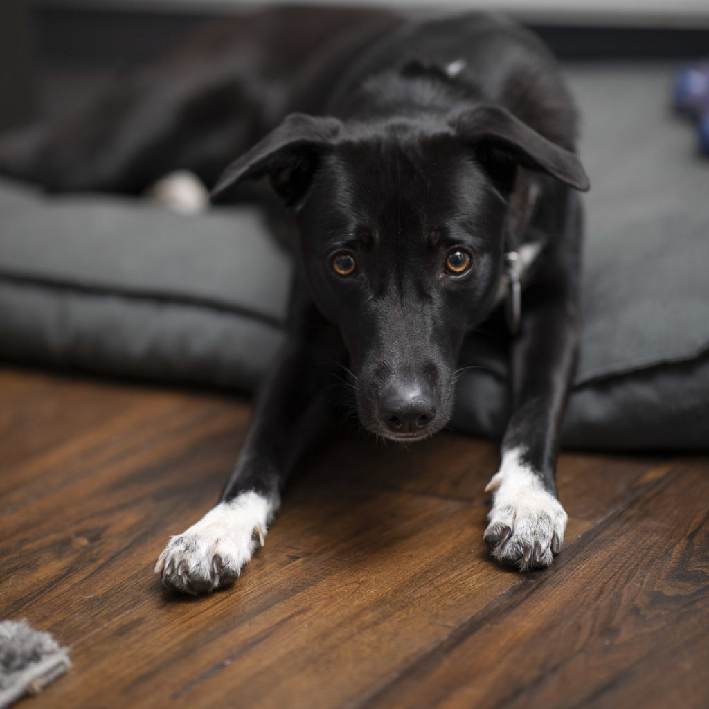 Therapiehund Niki